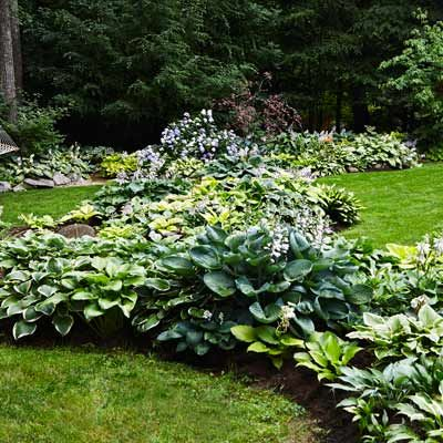 In curving rows, hostas create natural-looking, low-maintenance borders for a large expanse of lawn without hardscape edging. Here, they divide the turf into different outdoor rooms, adding to the feeling of a green oasis. | Photo: Alison Rosa | thisoldhouse.com