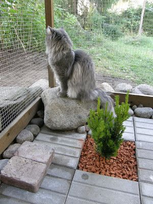 Inside a cat enclosure,great decorating idea!