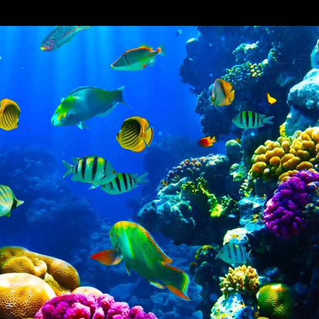 Best The Sea Images On Pinterest Aquarium Fish Aquarium And - Beautiful photography reveals underwater complexity aquariums