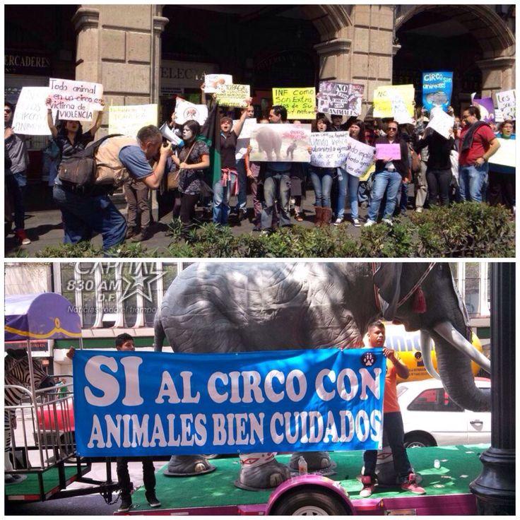 Protestan en el Zócalo Activistas en contra de animales en el circo, también los cirqueros se manifiestan #CircosSinAnimales                                 http://www.unotv.com/noticias/nacional/detalle/protestan-uso-animales-circo-zocalo-572067/