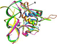 Structure analysis of free and bound states of an RNA aptamer against ribosomal protein S8 from Bacillus anthracis
