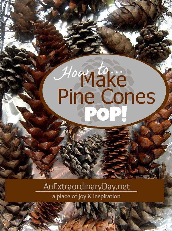 How to Make #PineCones Pop ::  Dry and Debug Pine Cones :: AnExtraordinaryDay.net