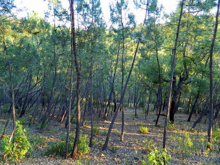 bosque de Valdelarte