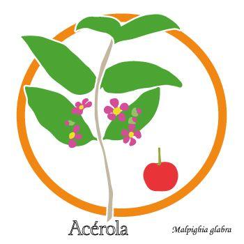 Plante et fleur - Acérola - Contre la fatigue passagère
