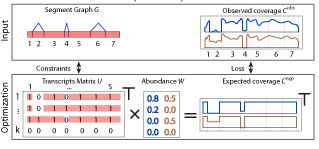 Researchers at the Sloan-Kettering Institute present the novel framework MITIE (Mixed Integer Transcript IdEntification) for simultaneous transcript reconstruction and quantification. They define a likelihood function based on the negative binomial distribution, use a regularization approach to select a few transcripts collectively explaining the observed read data, and show how to find the optimal solution using Mixed Integer Programming. MITIE can...