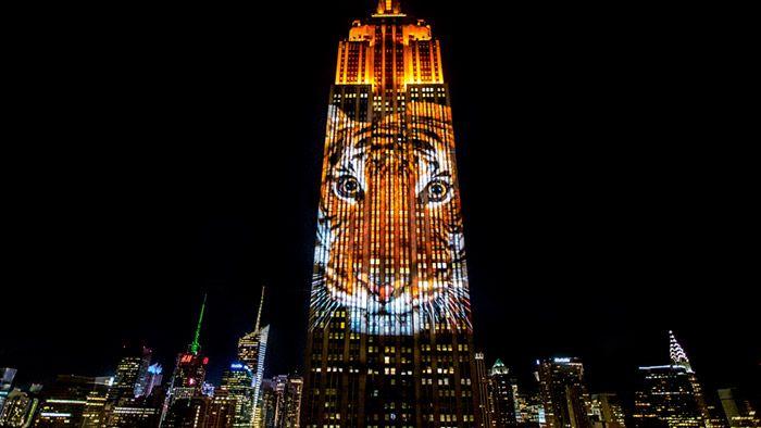 Na Empire State Building byly promítány ohrožené druhy zvířat