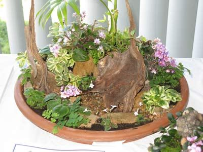 12 best african violet dish gardens images on Pinterest Dish