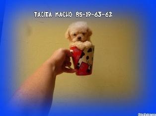 EN SU TACITA..!!