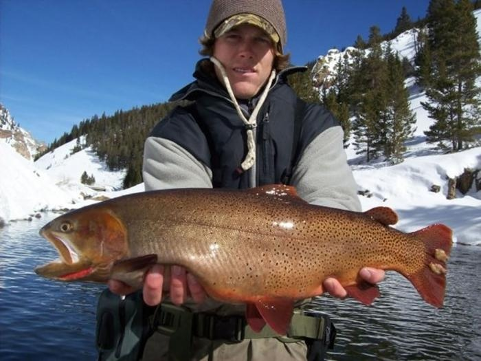 1000 images about almont and taylor canyon in gunnison for Crested butte fishing