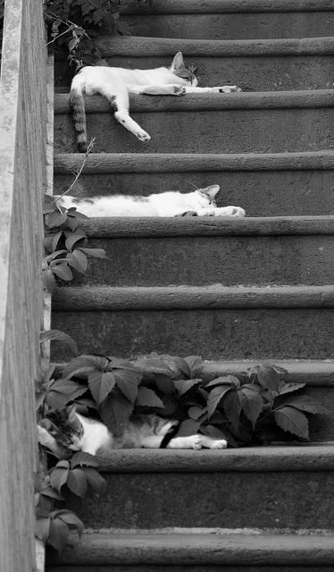 Kitties napping on stairs.