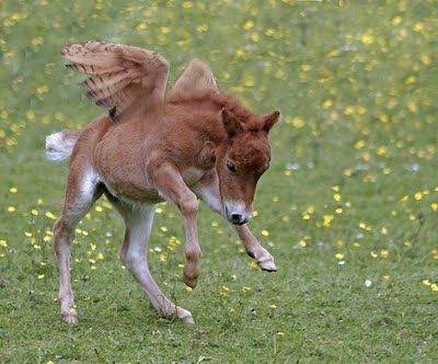 Pegasus Foal! They do exist! ;)