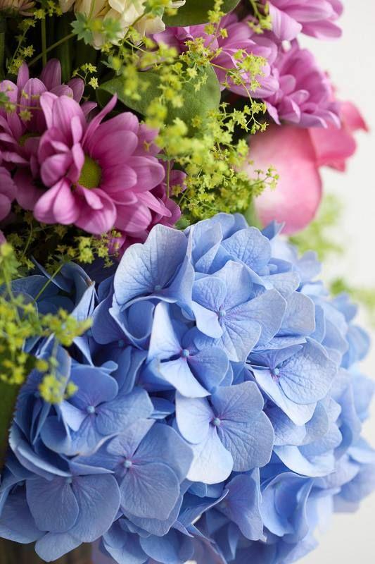 The Big and the Beautiful: maak kennis met zomerkoningin Hortensia. Hydrangea World www.vandijkbloemen.nl