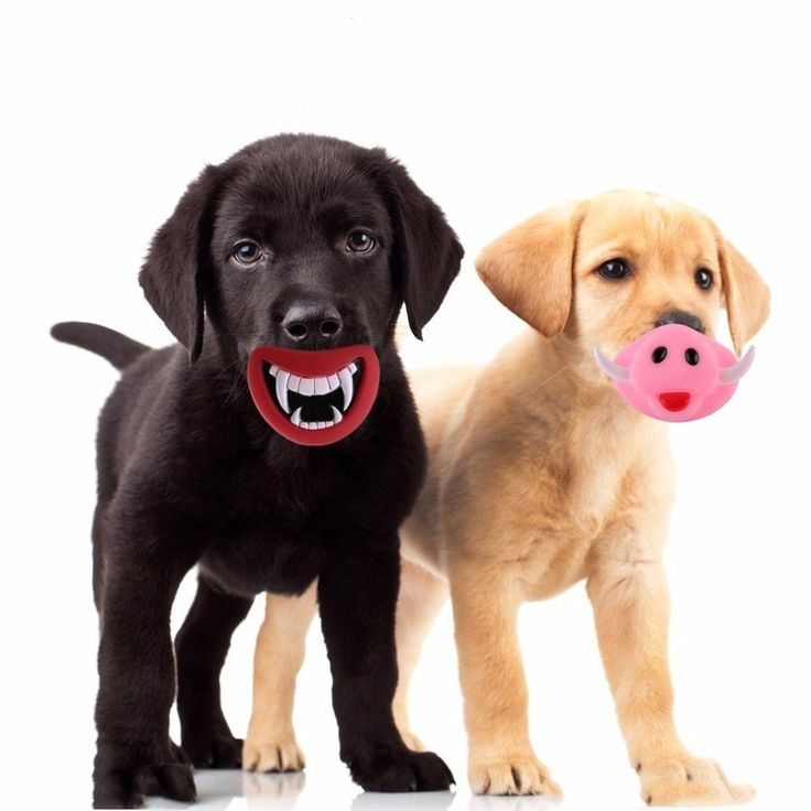 Cute Halloween Teeth/Pig Nose Pet Dog Giggle Treat Training Chew Sound Activity Toy Squeaky Chew Toys Pet Supplies