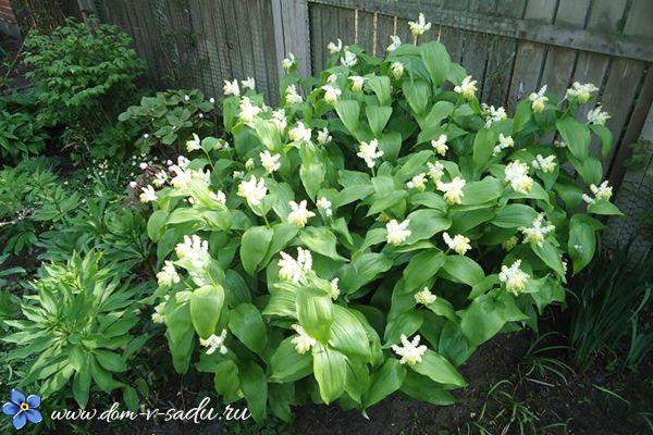 Какие цветы посадить в тени. 16 названий цветов, которые любят тень.   Красивый Дом и Сад