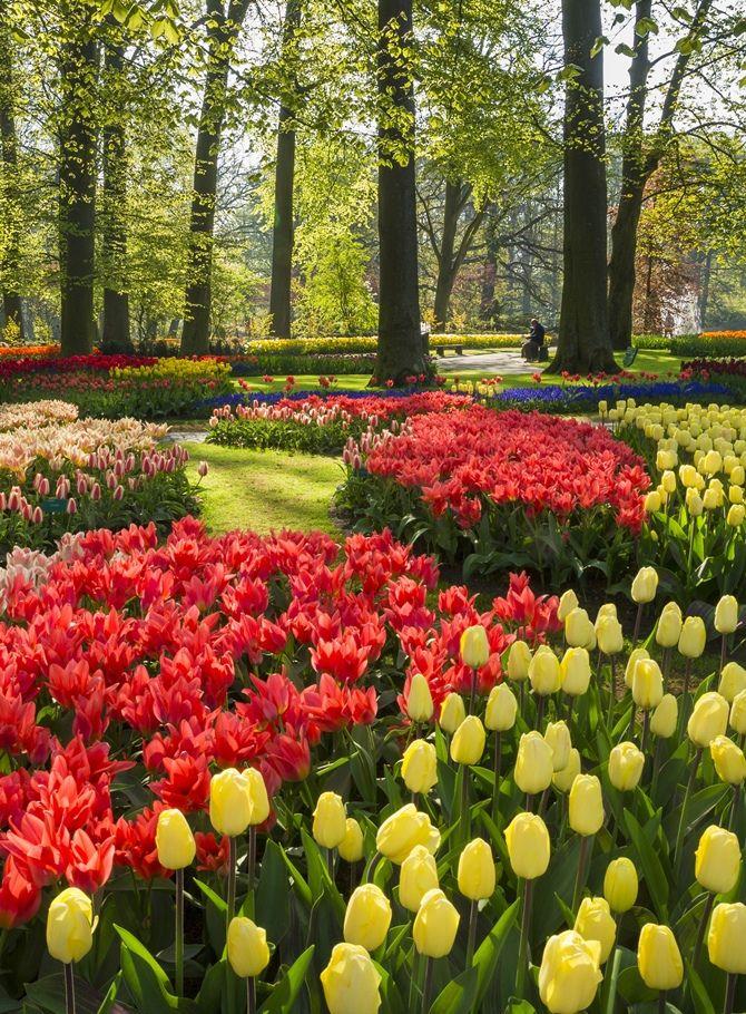 144 best Holland scenery images on Pinterest Holland Netherlands