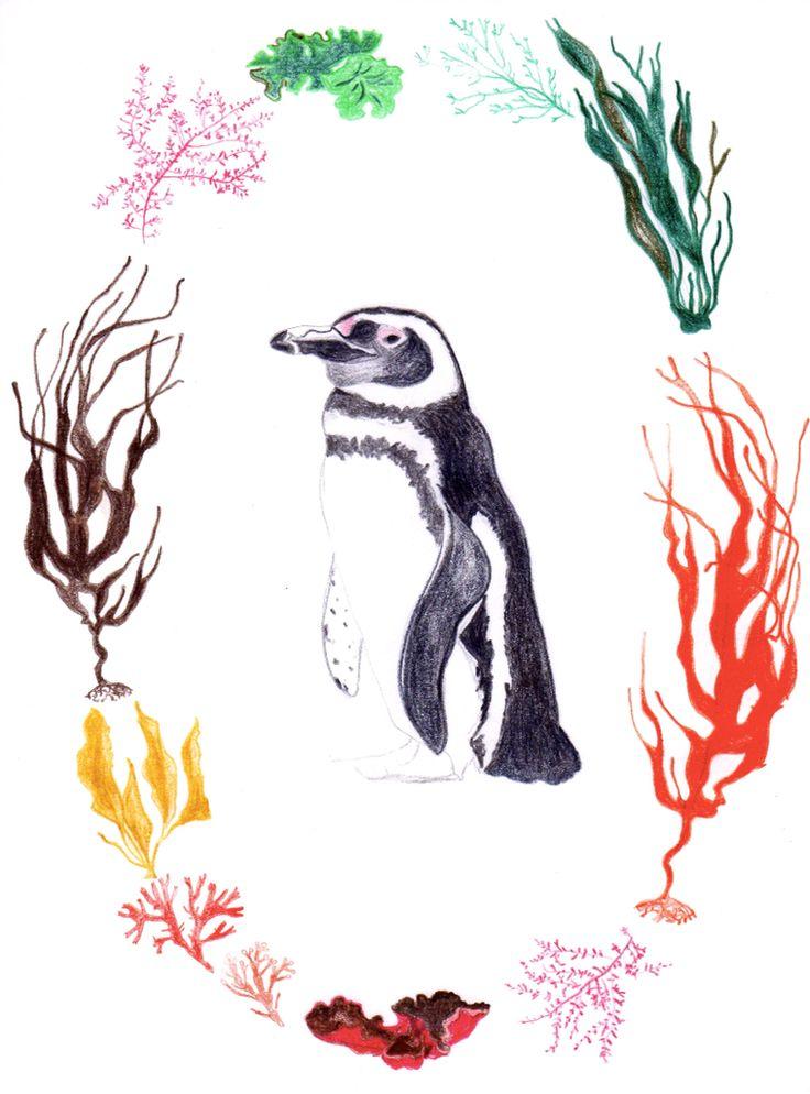 Pingüino Humboldt. Serie flora y fauna chilena. Lápiz a color. Por Coco & Co