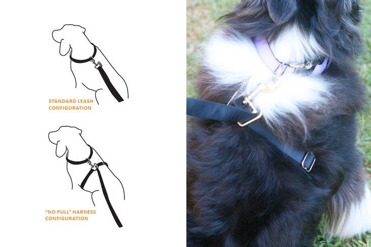 dog collars monogrammed