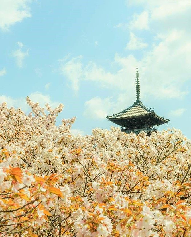 Ninna-ji Temple, Kyoto, Japan, World Heritage, 仁和寺, 京都, 日本, 世界遺産, 桜, sakura, cherry Blossom