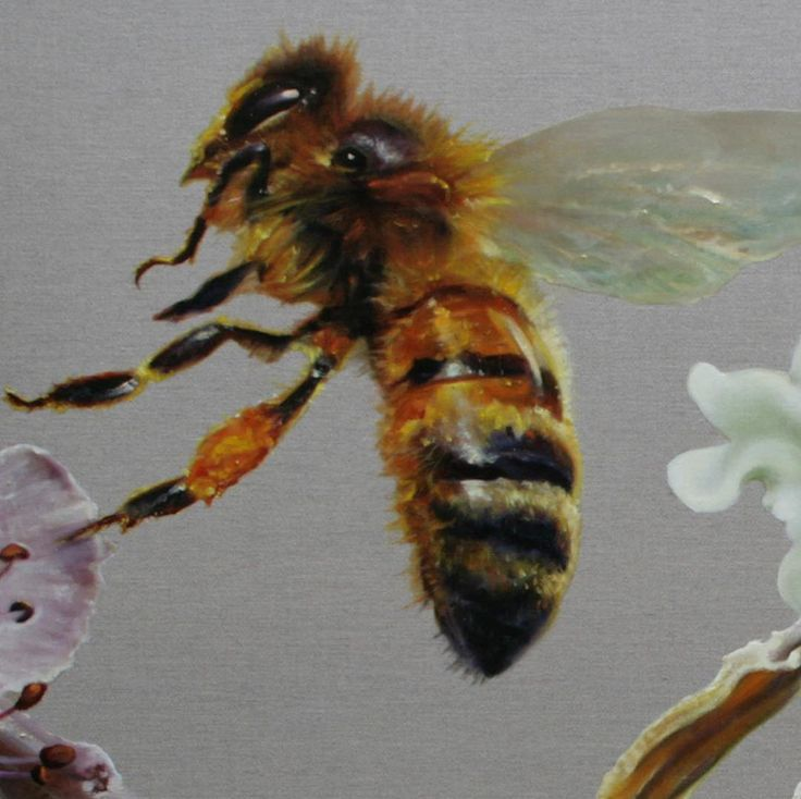Bees remind us to be industrious. This detail of a honey bee I painted in 2010 is a symbol of endurance and energetic enterprise - an integral part of any artistic endeavour! Wonderful art is usually the flower of many hours of intense focus rather than the poetic inspiration that is perceived. Check out the work of @mr.feathers_ to be inspired by the stunning outcome of meticulous labour.  #gatesofparadise #australianart #contemporaryart #gbartconsulting #botanicalart #oilpainting…