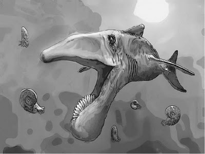 Helicoprion had a buzzsaw-shaped tooth whorl on its lower ...