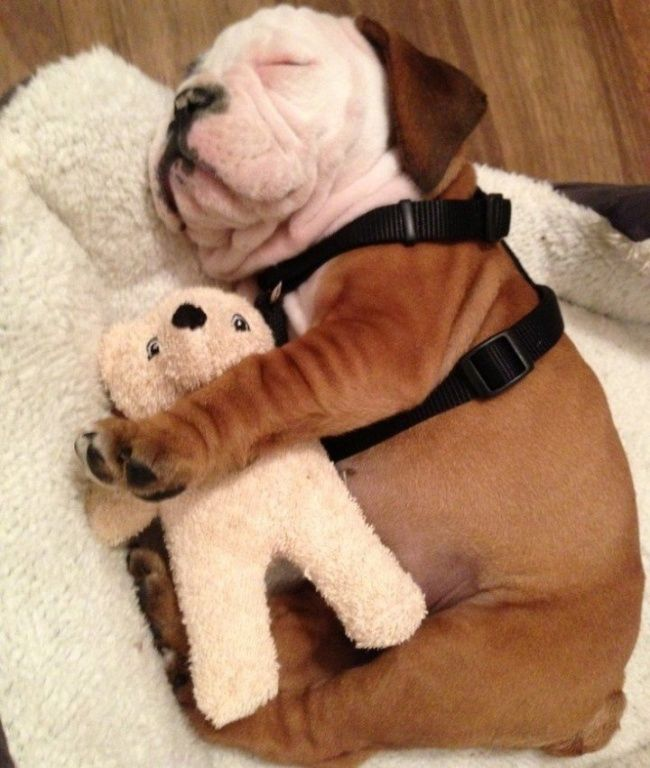 12adorable sleepy animals who just can't let gooftheir furry friends