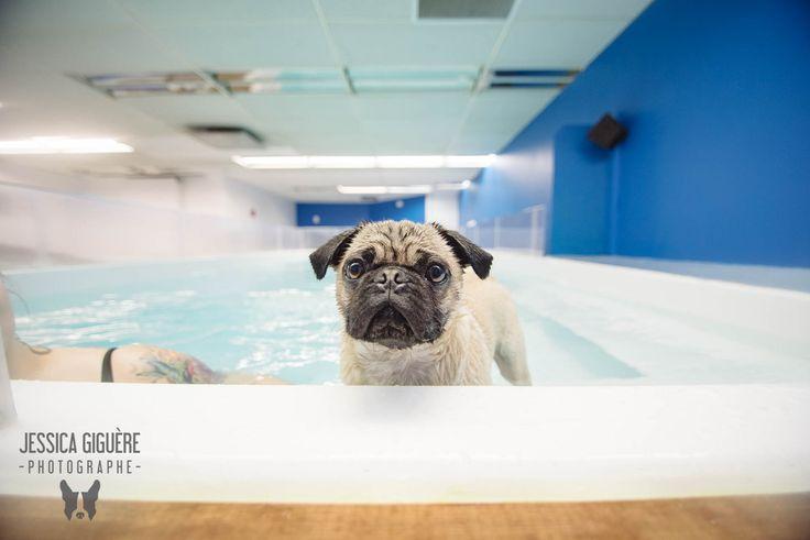 <p>Aqua+Confort+Animal,+situé+à+l'Ancienne-Lorette+dans+la+ville+de+Québec,+vient+d'ouvrir+un+espace+piscine+intérieur+pour+chiens.+Comment+en+profiter?+C'est+simple!+Réservez+votre+plage+horaire+(+50+minutes+)+au418-914-3444.+Un+peu+plus+sur+leur+entreprise+Aqua+Confort+Animal+est+un+centrecanin+offrant+aussi+des+services+pour+…</p>