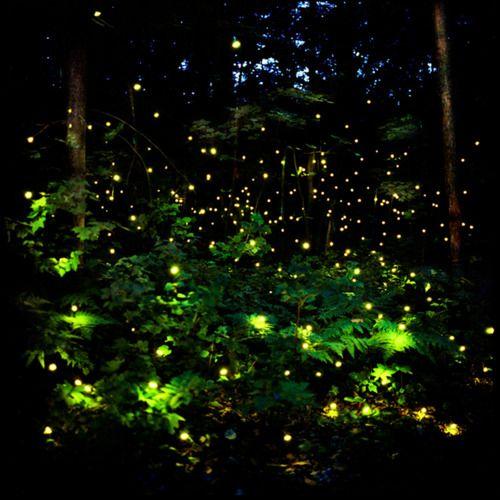 Fireflies. By Barry Underwood.