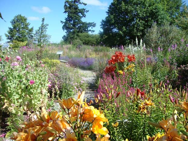 Bee Plant List for Gardens and Farms: free bee plant list for gardens and farms has been developed by Earthwise Garden