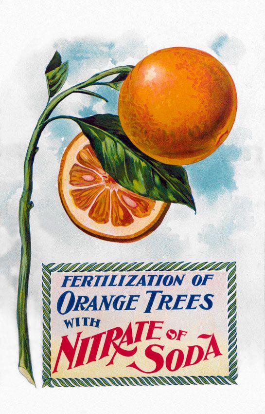usa/nitrate of soda