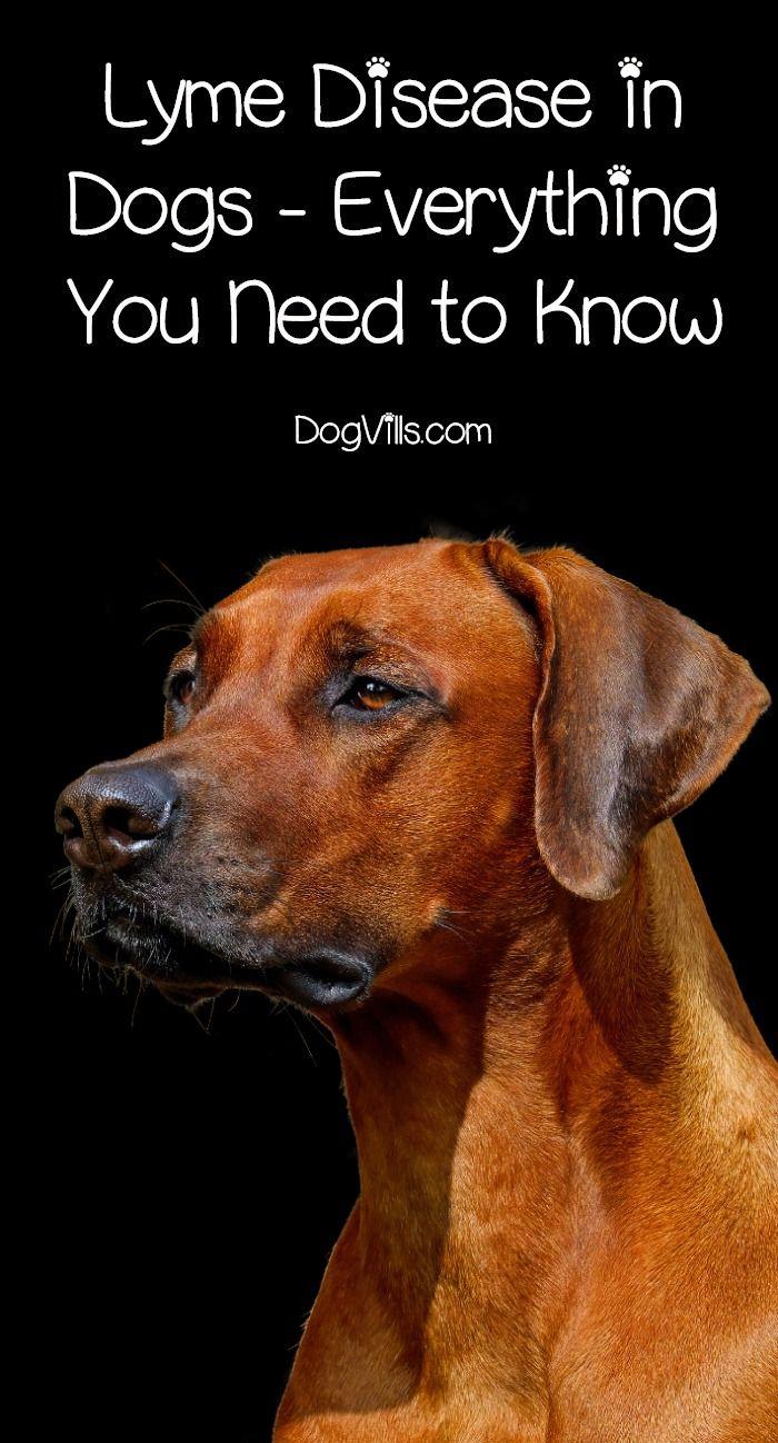 Dog Lyme Disease Symptoms and Treatment