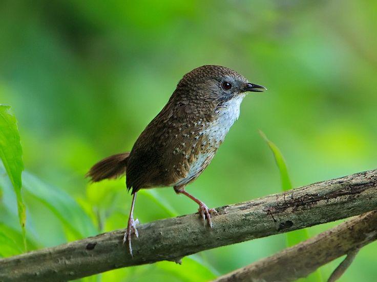 Ghosu Bird Sanctuary in Nagaland, India