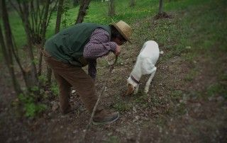 Giorgio goes truffle hunting behind his house in Costigliole D'Asti