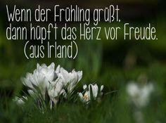 Zitat Frühling