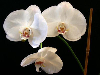 Homemade Orchid Fertilizer