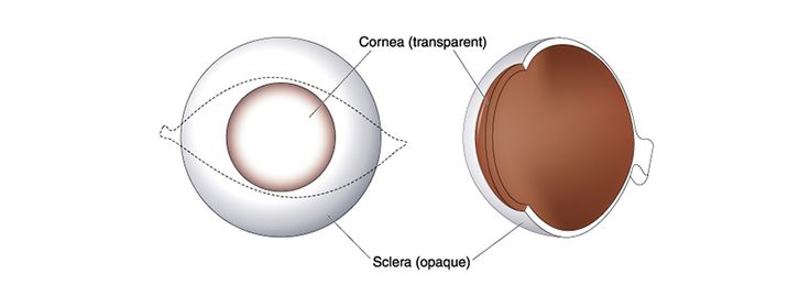 Cornea Transplantation is a simple operation within a short period of time an one-hour that replaces our sight. One of the most commonly performed transplant operations with modern surgical techniques.