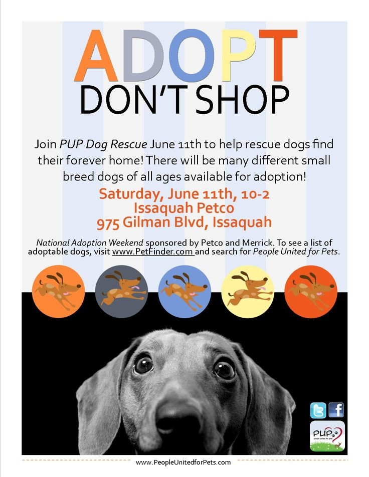 PUP Dog Rescue Flyers Dogs and Flyers