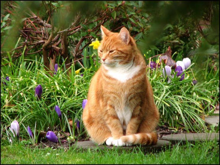21 best Cat Garden images on Pinterest Cat garden Cats and Cat