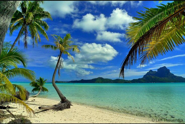 Coconuts, cocotier, beach ,