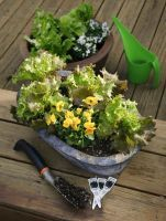 Salad bowls: Grow lettuce in containers