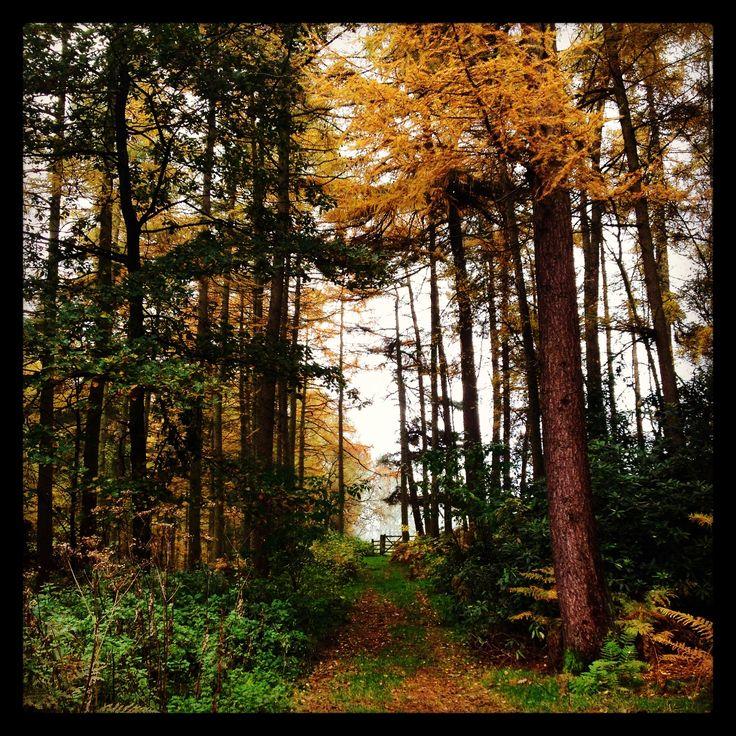 Woods near Osmaston, Derbyshire