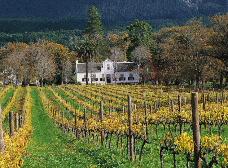 Vineyard and architecture