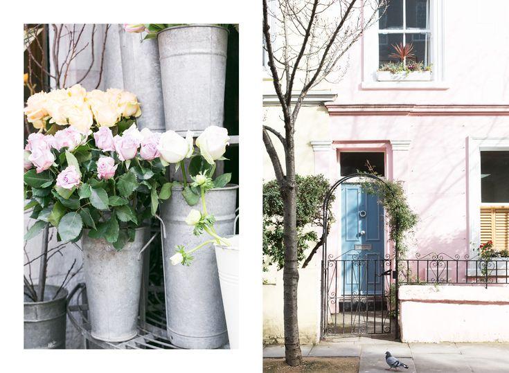 Roses ❤