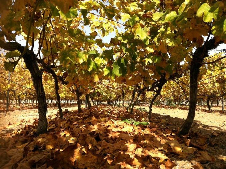 Viñedo #Contiempo en #otoño #Enoturismo