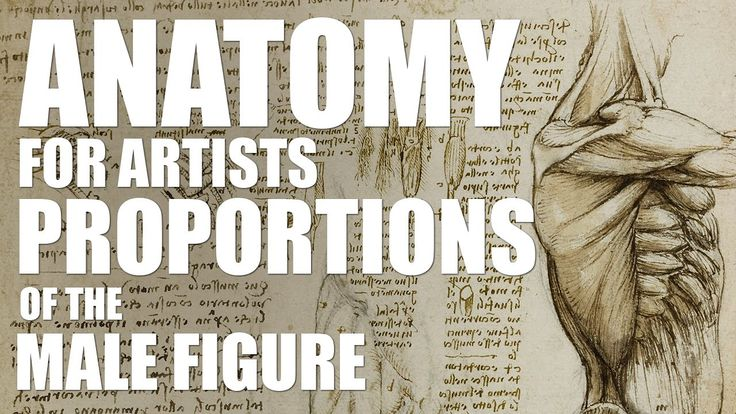 Anatomy for Artists - Proportions of the Male Figure