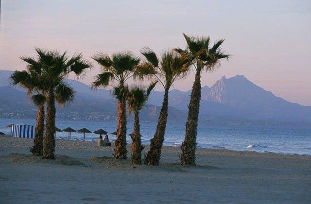 Alicante_Palmiers2