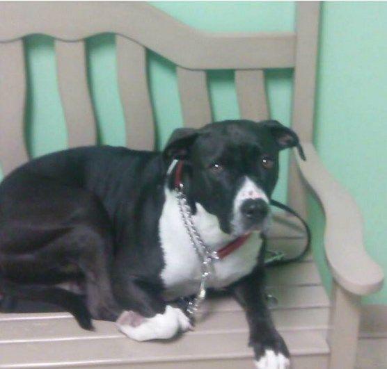 L'incredibile storia del cane che ha salvato il suo padrone