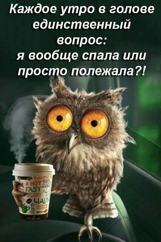 доброе утро сова шутка | Юмористические цитаты, Юмор ...