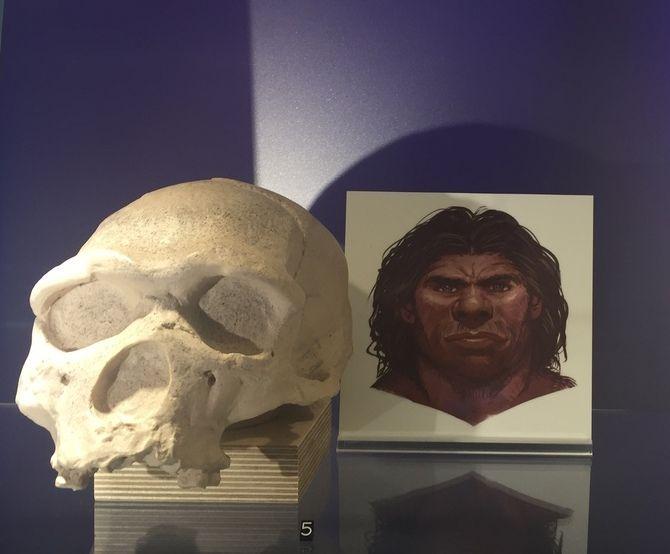 De mens ontstond buiten Europa. ongeveer 4.5 miljoen jaar geleden verschenen de eerste mensachtigen in Afrika. Ze zouden zich ontwikkelen tot Homo Erectus  En 1.75 miljoen jaar geleden betraden ze Europa. Engeland betraden ze 800.000 jaar geleden.   In Europa ontwikkelde ze zich tot Neanderthaler, een mensensoort geheel aangepast aan ons klimaat.