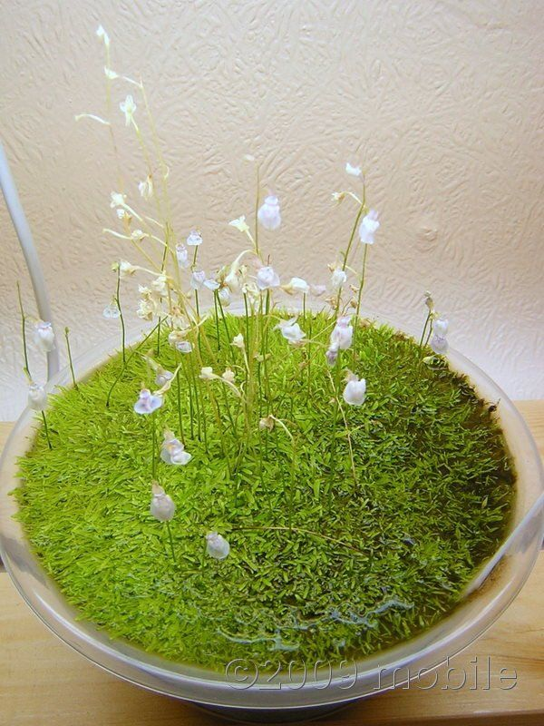 Best 25 Freshwater Plants Ideas That You Will Like On