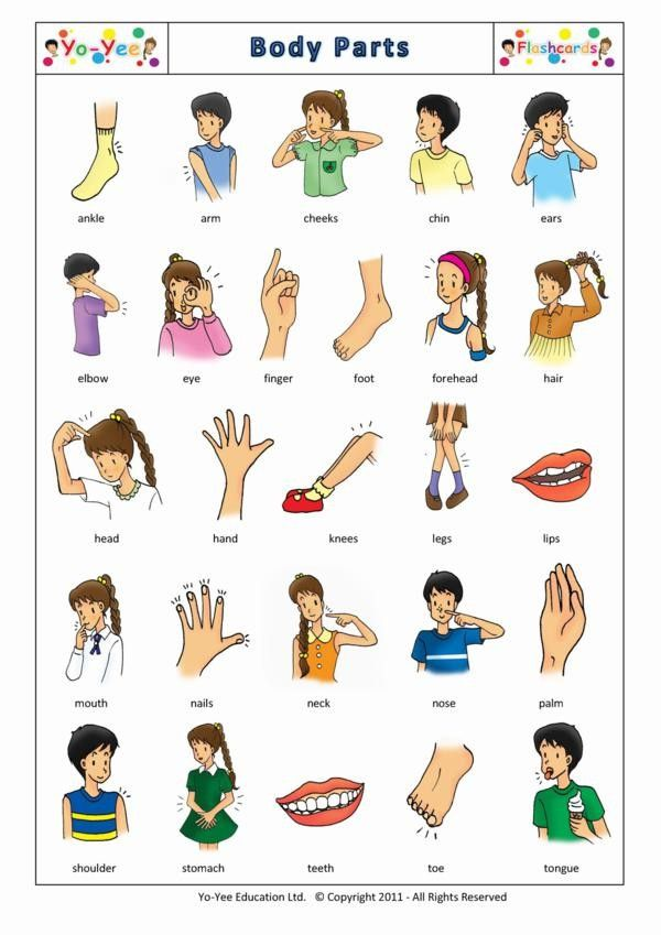 Body Part Images For Kids Body Parts Flashcards For Kids Body